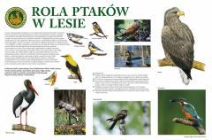 ROLA_PTAKOW_W_LESIE_20070515023200.jpg