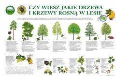 czy_wiesz_jakie_drzewa_20070509222840.jpg